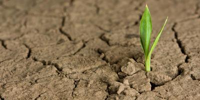 Регуляторы роста растений: за и против