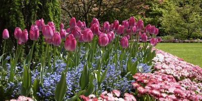 10 популярных растений для солнечной клумбы