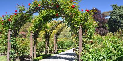 Идеи использования садовых арок на даче