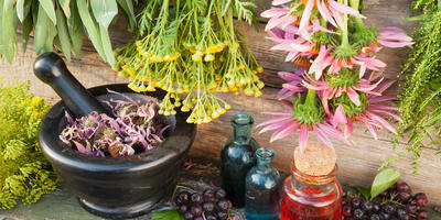 Черноплодная рябина: полезные свойства, секреты сбора и способы заготовки