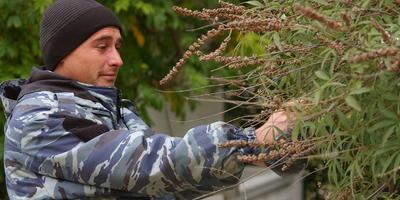 Семена деревьев и кустарников: сроки сбора и правила хранения