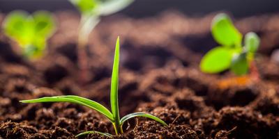 Органические удобрения: выбираем полезные для почвы