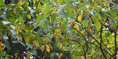 Древесные с оригинальными плодами — украшение дачи осенью