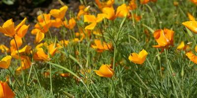 Однолетние цветы – выручалочки для красивой клумбы