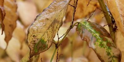 Комнатные растения: определяем проблемы по листьям