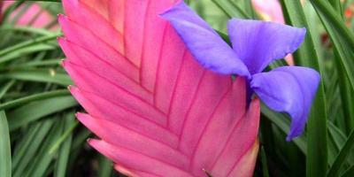 10 самых необычных комнатных растений