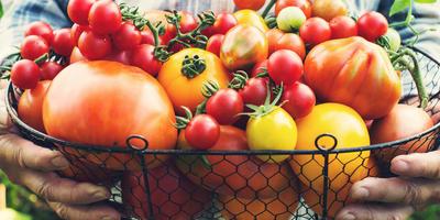 Какой томат самый вкусный: обзор проверенных сортов и гибридов