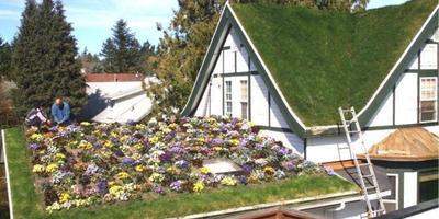 Сад на крыше: новая волна озеленения захватывает города