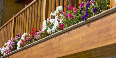 Красота на высоте: петунии для балконов, лоджий и террас