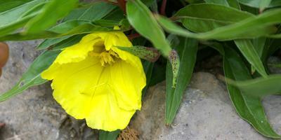 Яркие идеи для душистого сада: растения с фруктовыми и ягодными ароматами