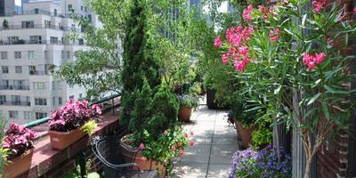 И на крыше могут яблони цвести: выбираем растения для высотных садов