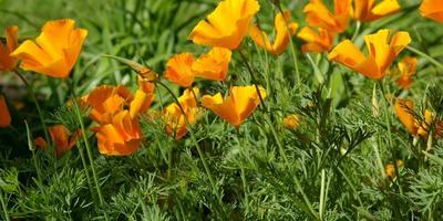 10 растений для бедных почв