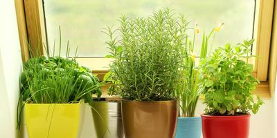 Создаем очаровательные горшечные композиции из пряных трав: 5 ароматных претендентов