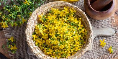 Секретные ингредиенты для кваса и сбитня, которые можно найти в своем саду
