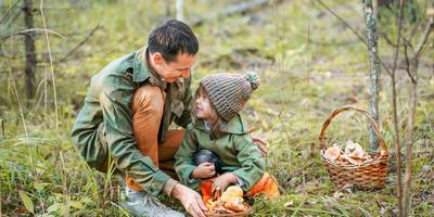Королевские грибы для засолки, которые появляются в лесу в сентябре