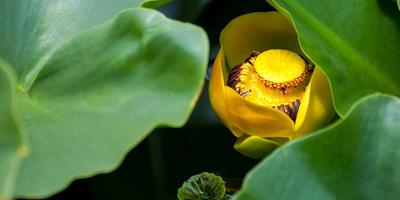 Растения, о съедобности которых вы вряд ли догадывались