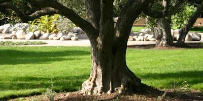 Библейские растения: деревья, кустарники, лианы