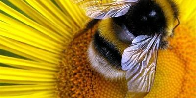 Как отвадить пчел и не навредить им?