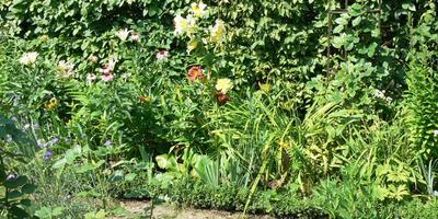 Живая изгородь в моем саду