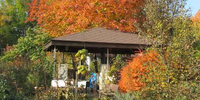 Краски осеннего сада