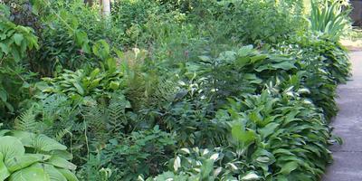 Облегчаем жизнь растениям и себе.