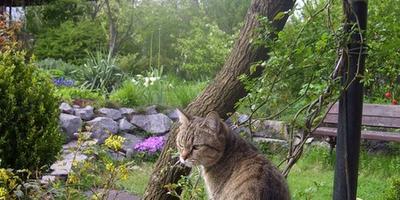 Хозяйка нашего сада