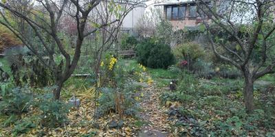 Осень: подзимний влагозарядный полив