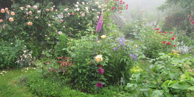 Сад моей мечты