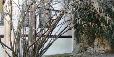 Обрезка декоративных кустарников: от Л до Н