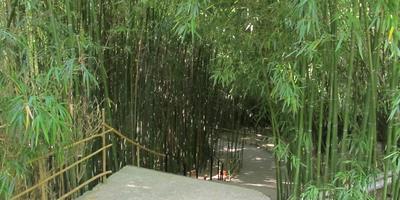 В бамбуковой роще Приморского парка