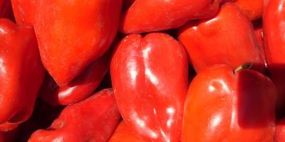 Овощная пора перца