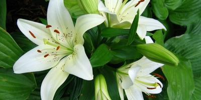 Растения Пресвятой Богородицы