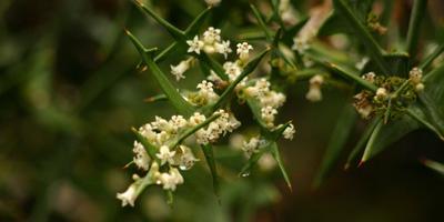Цветущий экзот октября - коллеция