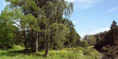 Декоративный огород - как это делали наши предки