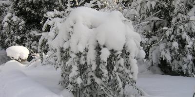 Сезонные работы в саду и огороде: первая неделя января