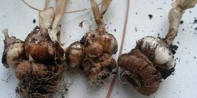 Размножение и посадка: вегетативное размножение