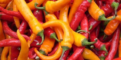 Перец горький – острый, горький и полезный