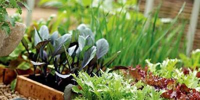 Сезонные работы в саду и огороде: вторая неделя февраля
