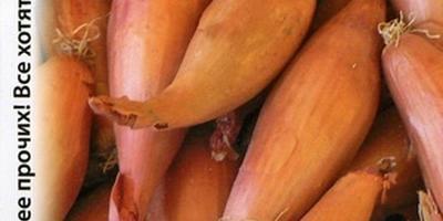 Лук-шалот с интересной историей и «кучей» луковиц