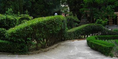 Стрижка и обрезка живых изгородей