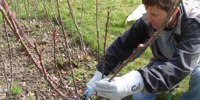 Сезонные работы в саду и огороде: первая неделя марта