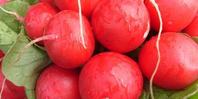 Редис – такой известный и незнакомый полезный овощ