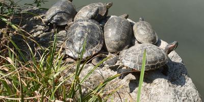 В апрельский день: черепахи и цветущие кактусы