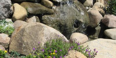 8 правил размещения растений в рокарии