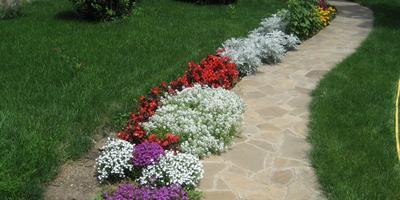 4 основных требования к цветочно-овощному оформлению газона и ассортимент растений