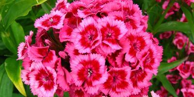 11 растений, цветущих в июне