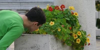 Не хватает ампельных растений