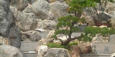 Как самому перенести проект каменистого сада в натуру?