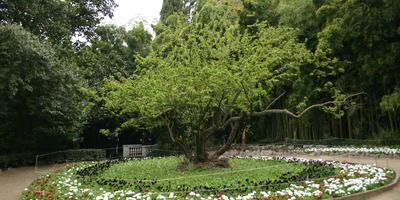 Лечебные силуэты деревьев