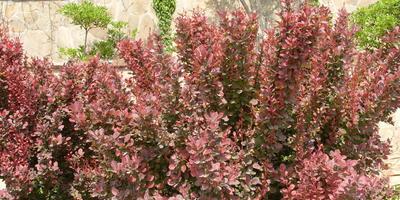 17 лучших декоративных кустарников для щелочных почв